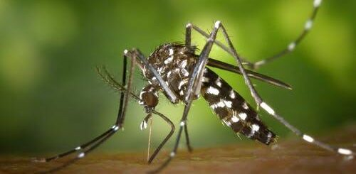Can mosquitoes transmit HIV Naked?